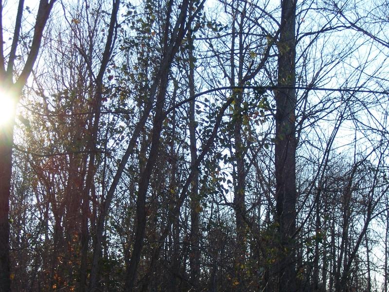 Kaleintrees_2